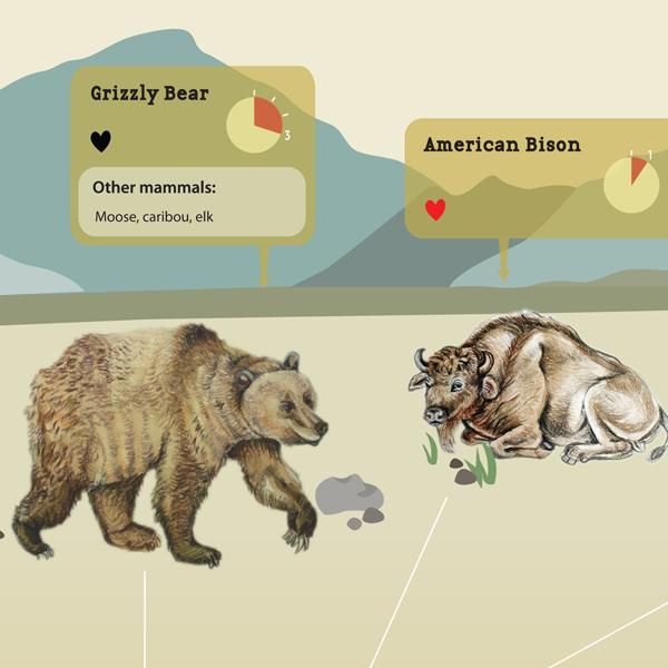 Westcoast Mammals' Gestation Periods - Gina Kim